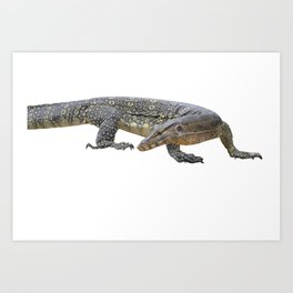 isolated varanus on on white background Art Print