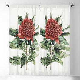 Waratah Flower Blackout Curtain