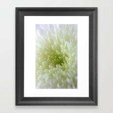 White Chrysanthemum Framed Art Print