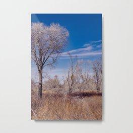 Winter Woods at Pahranagat National Wildlife Refuge, NV Metal Print