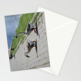 Bigs birds 2 Stationery Cards