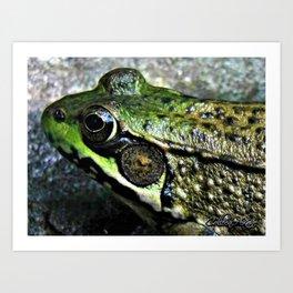 Frog Close-Up Art Print