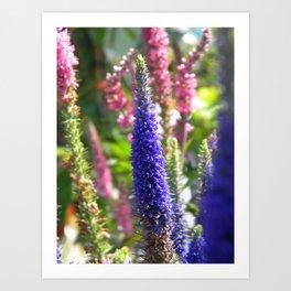 Tall Violet Flower  Art Print