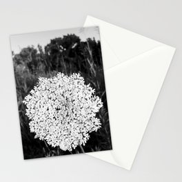 Queen Ann's Lace Stationery Cards