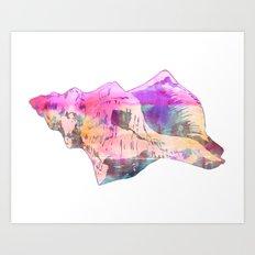Seashell #8E Art Print