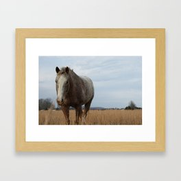 Happy Appy in the Pasture Framed Art Print