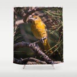 Morning Oriole Shower Curtain