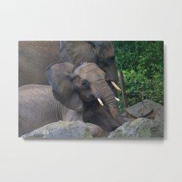 Elephants Eye Metal Print