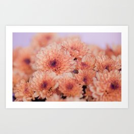 Chrysanthemum flowers 8605 Art Print
