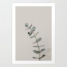 Stretch: minimalist botanical eucalyptus Art Print