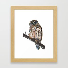 Mrs Ruru, New Zealand Morepork Owl Framed Art Print