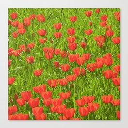 tulips field Canvas Print