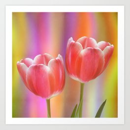 Colourful tête à tête tulips with canvas texture Art Print