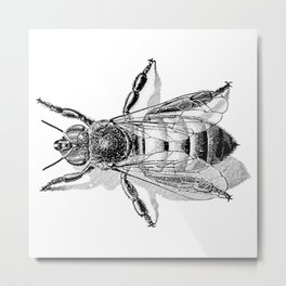 Vintage Honeybee Metal Print