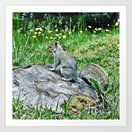 Gray squirrel on tree stump Art Print