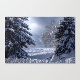Winter Pathway Canvas Print