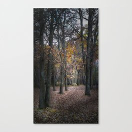 Going to the light Canvas Print