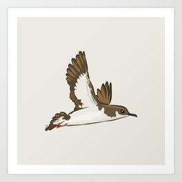 Simple Minimalist Manx Shearwater Flying Art Print