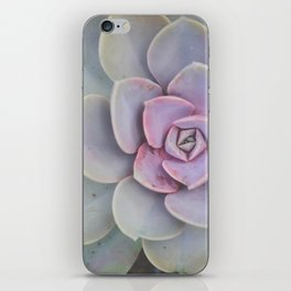 Purple and Green Succulent Photograph iPhone Skin