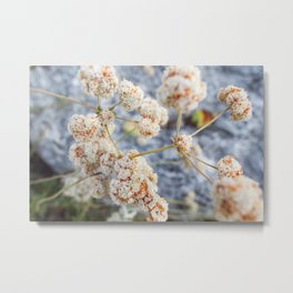 Pink and Peach Flowers Metal Print