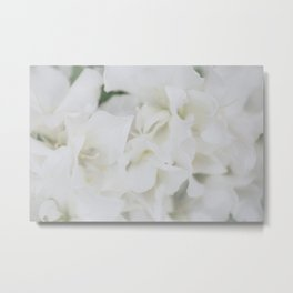 Spring in White Metal Print
