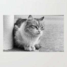 thoughtful Sad Cat Rug