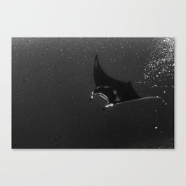 Manta among the bubbles Canvas Print
