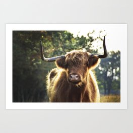 Highland Cow in the wildernis | Photography | Art print | Photo print Art Print
