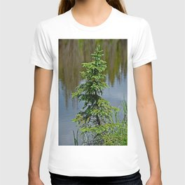 Lake Irene 2018 Study 3 T-shirt