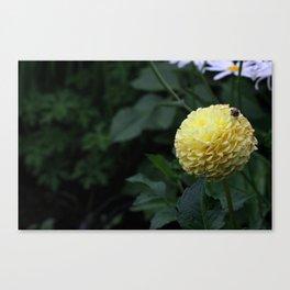 Natural Ruffles Canvas Print