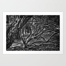 Silver Trees and Crooked Roots Art Print