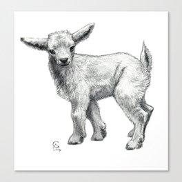 Little Goat Baby  SK134 Canvas Print