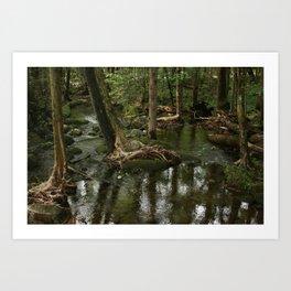 Greenbrier Wetland Art Print