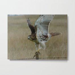 Birds No.9 Metal Print