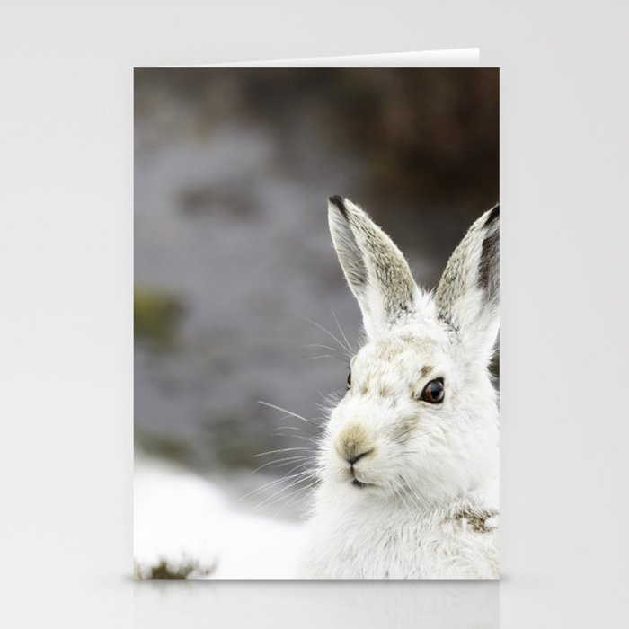 white mountain hare Stationery Cards