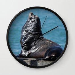 California Sea Lion Wall Clock