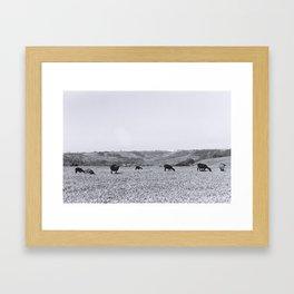 Starrring sheep Framed Art Print