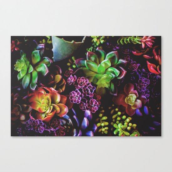 Colorful Succulent Plants Canvas Print