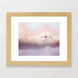 Roseate Spoonbill (Platalea ajaja) in Flight over lake Framed Art Print