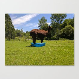 I Fit, Right? Canvas Print