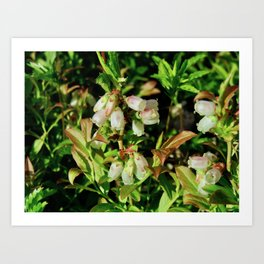 Tiny Blossoms on a Dirt Road Art Print