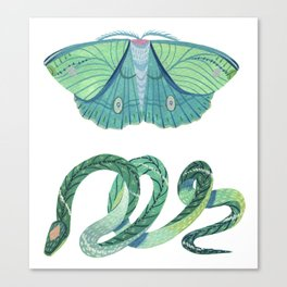 Moth and Snake Canvas Print