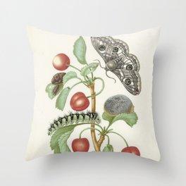 Maria Sibylla Merian Vintage Botanical Print Throw Pillow