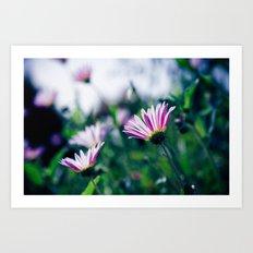 Flowers in Paris 1 Art Print