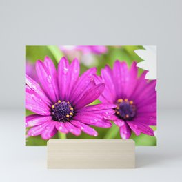 Morning Dew on Purple Daisies by Reay of Light Photography Mini Art Print