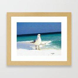 Emerald Coast Seagull  Framed Art Print