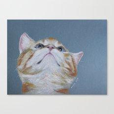 Juno. The Bird Catcher. Pastel Kitten Canvas Print