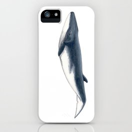 Bryde´s baby whale (Balaenoptera brydei) iPhone Case