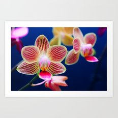 Variegated Orchids Art Print