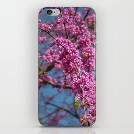 Blue skies and redbud in spring iPhone Skin